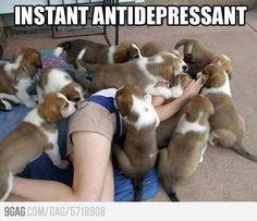 Best antidepressant ever
