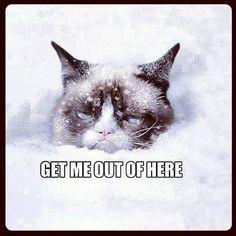 Grumpy No Like Snow Too Much.   DAVE EDWARD GARCIA   Flickr