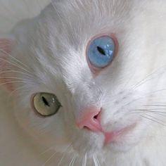#heterochromia