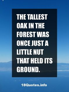 30 Motivational Quotes: The tallest oak in the forest was once just a little nut that held its ground.