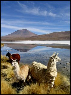 - Bolivia#Repin By:Pinterest++ for iPad#