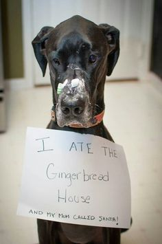 17 Dogs Who Discreetly Bend Their Owner's Rules 23 Not So Great Danes