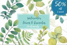 50% OFF Watercolor leaves & branches by Sunny Illustrations on @creativemarket