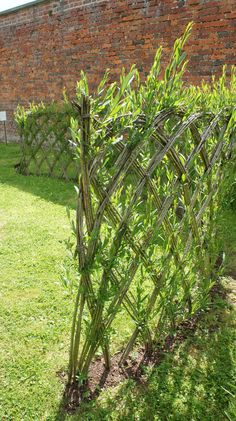 Willow switches will bend and sprout with a little love. Great fence idea for between houses, and willow will suck all the water up in the wet side 9f the house!