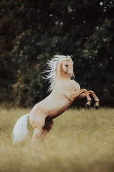 Beautiful Horse Pictures, Beautiful Horses, Animals Beautiful, Cute Animals, Majestic Horse, Majestic Animals, Palomino, Horse Love, Horse Girl