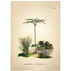 The Dybdahl Co. Home Botanical Palm Astrocaryum Acaule Print (5.960 RUB) ❤ liked on Polyvore featuring home, home decor and wall art