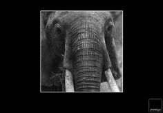 Elephant in Kenia Elephant, Spaces, Animals, Kenya, Animales, Animaux, Animais, Elephants, Animal
