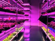 From clean rooms to grow rooms: High-tech companies cultivate indoor farms