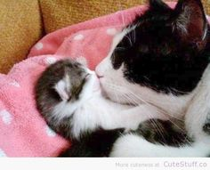 cute cats and kittens   Cat Kissing Her Kitten   CuteStuff.co - Cute Animals Cute Pictures ...