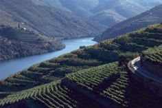 Duoro Valley, Portugal (n. Transformers, Hotels Portugal, Douro Valley, Port Wine, Spain And Portugal, Travel Goals, European Travel, Wine Country, Cool Places To Visit