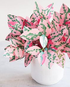 house plants 530369293617348381 - Paper Chinese Money Plant DIY — The Apple of My DIY Source by montyorkay Best Indoor Plants, Cool Plants, Indoor Cactus, Indoor Herbs, Unique Plants, House Plants Decor, Garden Plants, Succulent Plants, Cactus Plants