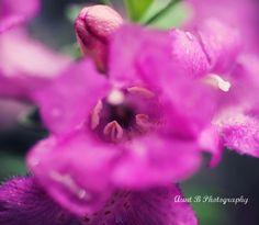 http://auntbphotography.tumblr.com/  https://www.facebook.com/AuntBPhoto