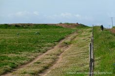 Cranes, Blue_Darling_SA IV South Africa Wildlife, Country Roads, Tours, Blue