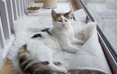 Take a peak inside Lady Dinah's Cat Emporium - London's first cat cafe! #cats #cat #catlovers #cute #catcafe #animals #london #pets #petlovers #fluffy