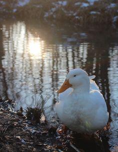 夕方の池で。そろそろご飯の時間です。