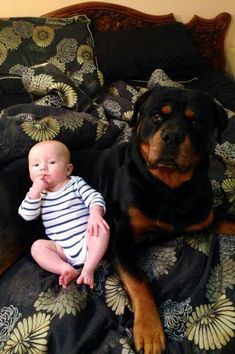 Rottweiler Welpen Everything we enjoy about the Rottweiler Pup Big Dogs, I Love Dogs, Cute Dogs, Dogs And Puppies, Dogs 101, Rottweiler Puppies, Mundo Animal, Training Your Dog, Happy Dogs