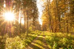 Autumn, Forest, Leaves, Sun, Back Light, Trees, Nature