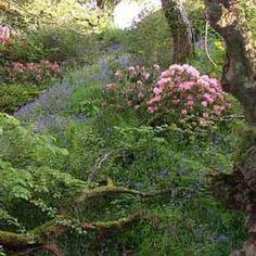 Nant-y-deri garden.