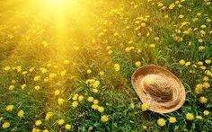 Znalezione obrazy dla zapytania summer