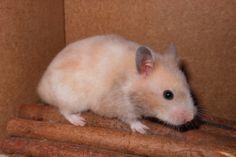 logga in mötesplatsen hamster free