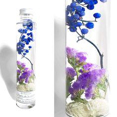Herbarium BLUE | Plante de la cuisine