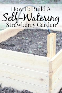 How to build a self-watering strawberry garden - it's so easy!