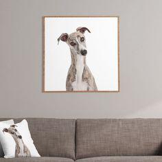 Susan Goddard Italian Greyhound Dog On White Framed Wall Art | DENY Designs Home Accessories #italiangreyhound #greyhound #whippet #canvasprint #moderndecor #homedecor #dog #dogart http://www.denydesigns.com/products/susan-goddard-italian-greyhound-on-white-framed-wall-art