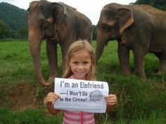 Say NO to animals in the circus [and any other spectacle/show where animals are used for entertainment ]