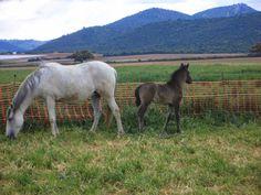Mis caballos