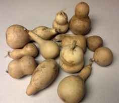 Ornament gourds