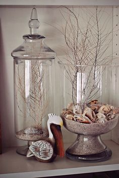 Displays for shell and coral