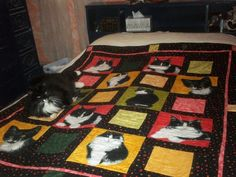 My Molly quilt