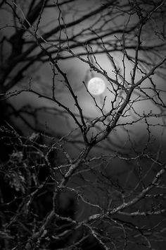 photography photo moon forest images nights pics darkness goth gothic Goth girl fallen creepy girl fallen fayth goth things