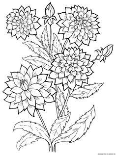 213 meilleures images du tableau coloriage nature coloriage nature coloriage zen et coloriages - Coloriage fleur edelweiss ...