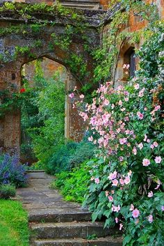 Japanese anemones near an arched doorway
