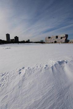 Arctic tundra in Cambridgeport near MIT.