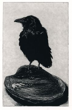 For some reason, this is beautiful even though it's black and a crow.