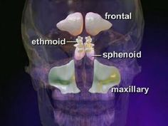 """Discovery Health """"What are some natural remedies for sinus blockage and congestion?"""""""