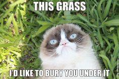 Grumpy Cat™ Memes   Grumpy Cat® - The world's grumpiest cat!