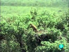 El Hombre y la Tierra, Fauna Iberica - Doñana 4 - YouTube