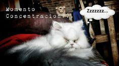 No molestes... concentrado #funny #cute #estamostanagustito