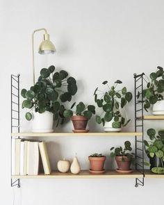 etagere string plante grasse verte succulente et lampe laiton