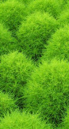 / 緑(みどり) painful or soft?painful or soft? Green Grass, Go Green, Green Colors, Colours, World Of Color, Color Of Life, Photographie Macro Nature, Pantone Greenery, Color Of The Year 2017