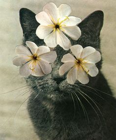 Cats & Plants, A Beautiful Collage Series by Stephen Eichhorn