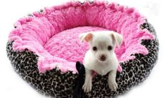 Spring Special Minky Couture Doggie Bed Leopard Print With Hot Pink Medium Pink Dog Beds, Pet Beds, Cute Puppies, Cute Dogs, Leopard Bedding, Yorkie Dogs, Chihuahuas, Chihuahua Love, Girl And Dog