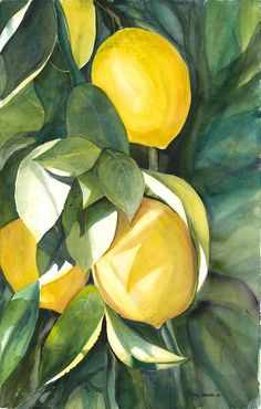 Lemons Painting by Ileana Carreno