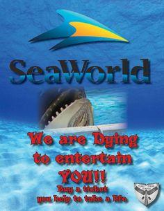 #boycottseaworld boycott seaworld sea world #seaworld empty the tanks #emptythetanks  doplhins dolphin orca orcas whales #blackfish blackfish the cove 6 six san diego #sandiego injustice cruelty animal rights