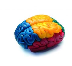 JOHN M. ARMLEDER CLLC #brains John Armleder, John Cage, Fluxus, Circa, Reproduction, Art Activities, Product Design, Concept, Yoga