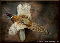Cigar Room, Pheasant, Birds, Pets, Animals, Google, Image, House, Animales