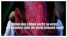 Mein Papa sagt...  Nimm das Leben nicht so ernst, du kommst hier eh nicht lebend raus!    #Zitate #deutsch #quotes      Weisheiten und Zitate TÄGLICH NEU auf www.MeinPapasagt.de